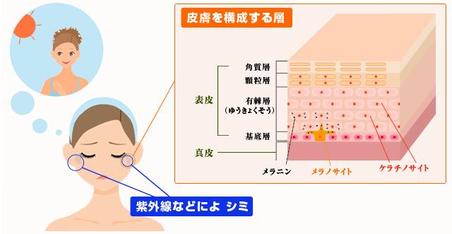 肌のシミの原因|日焼け予防|シミ対策|株式会社清心丹
